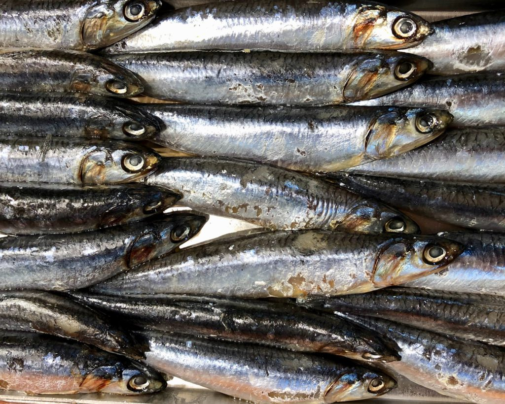 Anchovies can be used in many delicious recipes, but are anchovies good for you?